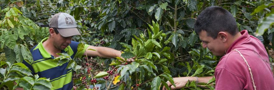 Comment accompagner les caféiculteurs vers une démarche éco-responsable?