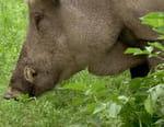 La nature en liberté : Le parc de l'Eifel