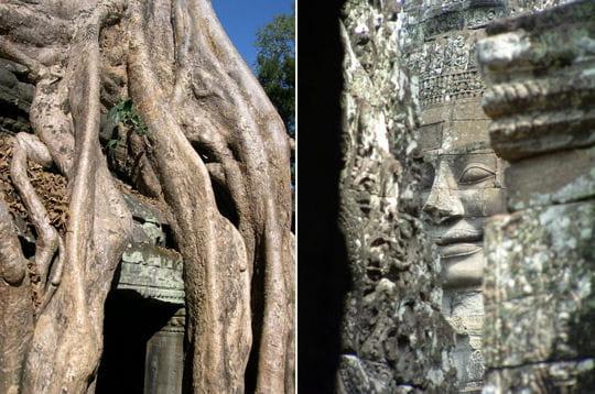 Entre pierres et racines