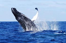 Destination : baleines !