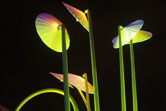 Fleurs de lumière