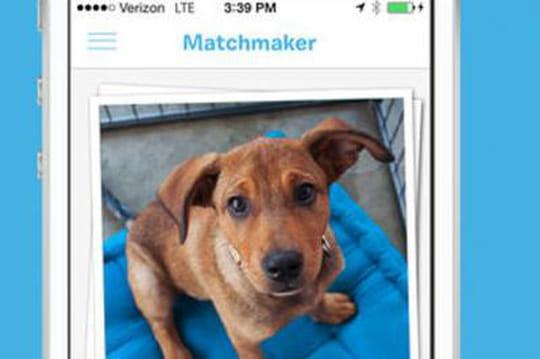 BarkBuddy: l'application de rencontre entre chien et maitre