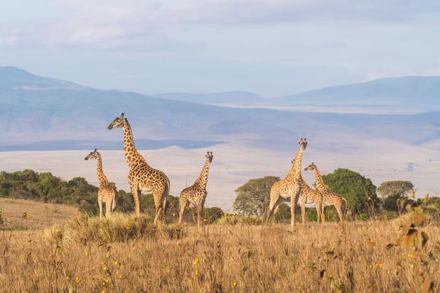 L'aire de conservation du Ngorongoro en Tanzanie