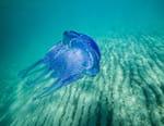 Le siècle des méduses