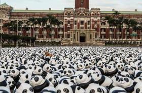 1 600 pandas : un projet artistique intelligent