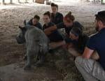 Au coeur du zoo : Tampa