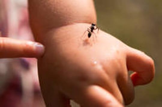 Se débarrasser des fourmis: nos astuces anti-fourmi