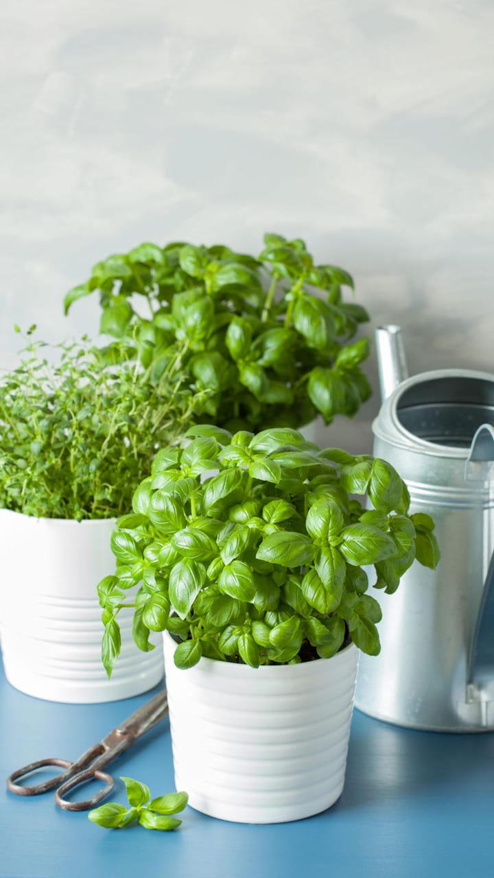 Planter Herbes Aromatiques Jardiniere conseils pour faire pousser et entretenir des plantes