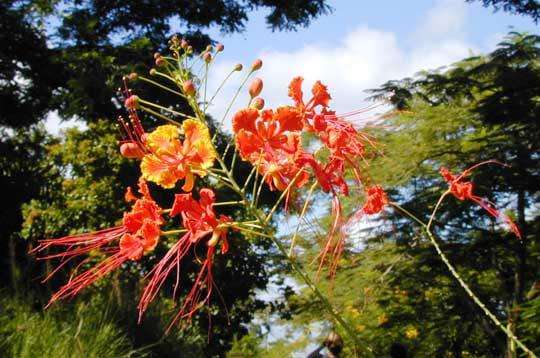 Des fleurs chatoyantes