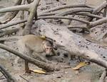 La vie secrète des mangroves