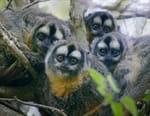 Primates, la force du clan