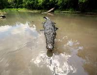SOS Matt : Attaque de crocodiles dans la rivière Finnis
