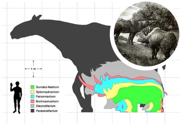 Le plus grand mammifère terrestre du monde