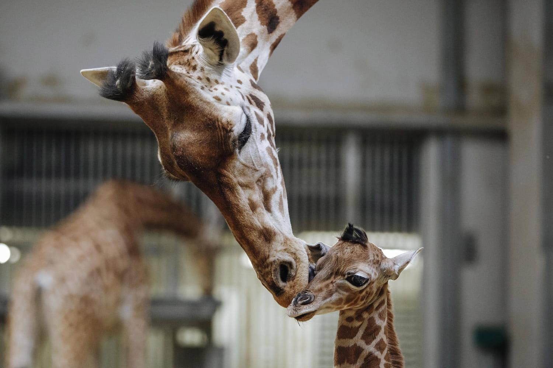 Parc zoologique de Paris: expos et nouveaux animaux, le programme