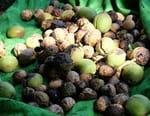Les noix, le trésor du Kirghizstan