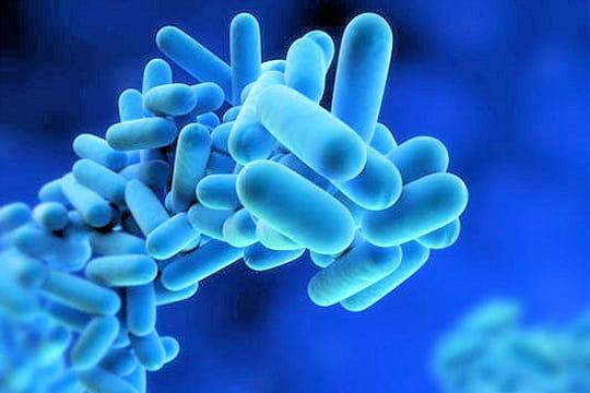 Bactérie de la légionellose