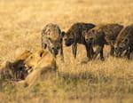 Redoutables prédateurs