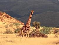 Ushuaïa nature : Voyage extraordinaire en Afrique australe