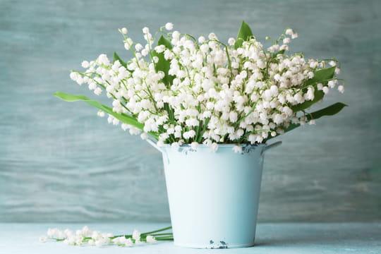 Muguet: une fleur porte-bonheur mais aussi toxique [Infos, photos]