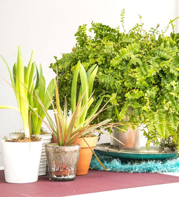 misez sur les plantes vertes. Black Bedroom Furniture Sets. Home Design Ideas