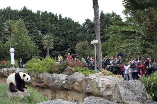 Zoo de Beauval: animaux à voir, tarif, horaires, préparer votre visite
