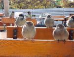 La métropole sauvage : Berlin et ses animaux