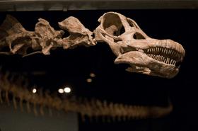 Dracoraptor : le Pays de Galles découvre un nouveau dinosaure