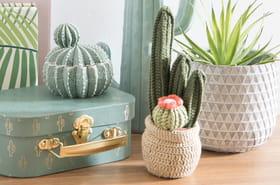 Comment le cactus va mettre du piquant dans nos intérieurs