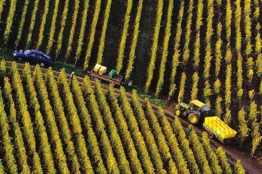 La vente de vignes connaît aussi sa crise