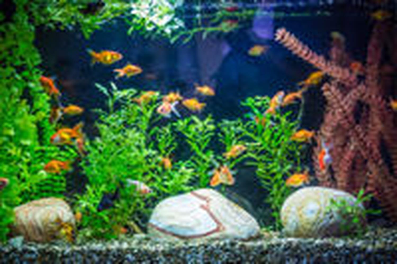 Aquariophilie: tout ce qu'il faut savoir avant de se lancer