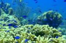 Les courants océaniques : gros pompeurs de CO2 dans l'Atlantique Nord