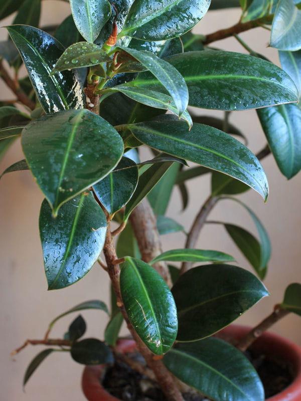 Les plantes vertes for Les plantes vertes