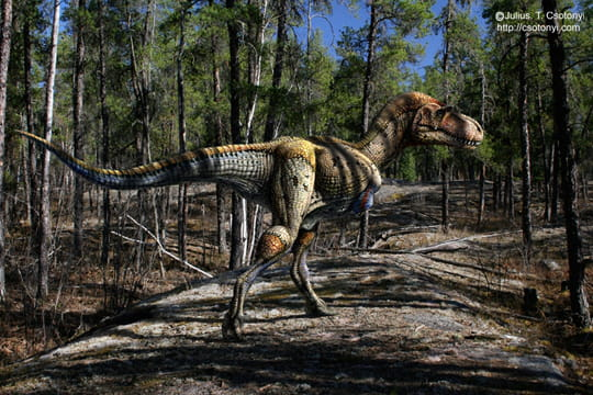 Chasse dinosaures