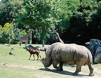 Animaux stars du zoo : Le zoo de Beauval