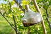 Piège à mouche: fabriquer un piège efficace