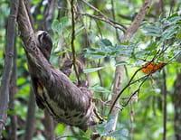 Indonésie sauvage : Colombie : La Serranía de Chiribiquete