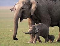 Les animaux déraillent : Combat à mort !