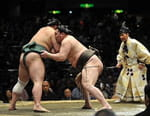 Sumo - Fight Sports Grand Sumo 2016/2017