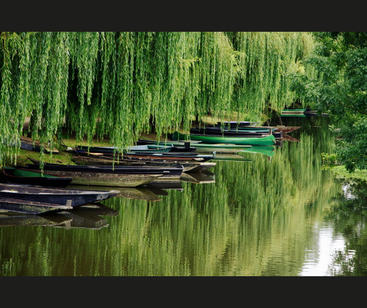 Entre ciel et eau, détours dans les marais de France