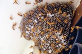 Se protéger des insectes cet été