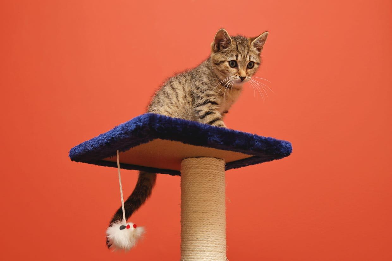 Arbre A Chat A Faire Maison arbre à chat : comment choisir le meilleur, nos suggestions