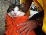 Amsterdam sauvage : Suivez le chat !