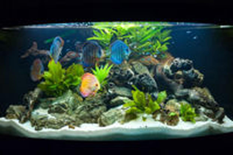 Decor D Aquarium Eau Douce