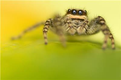 l'utilisation d'un diffuseur (visible dans le reflet des yeux de l'araignée)