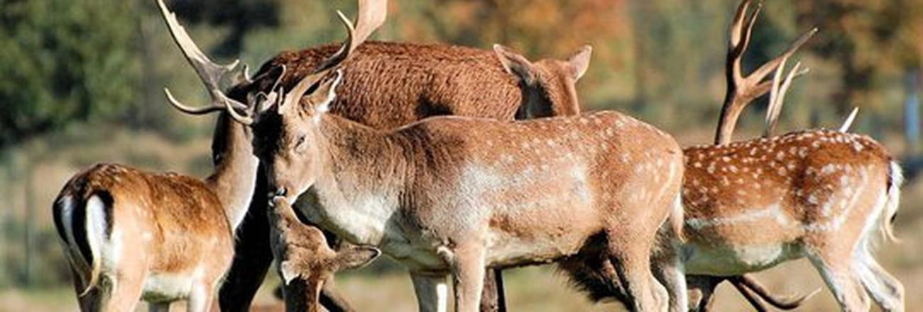 Rencontre avec les mammifères de la forêt
