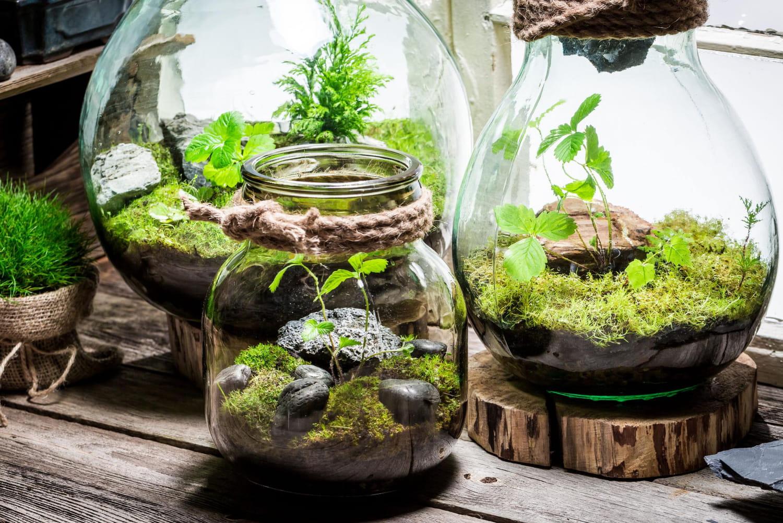 Meilleur terrarium: sélection et conseils pour bien le choisir et l'entretenir