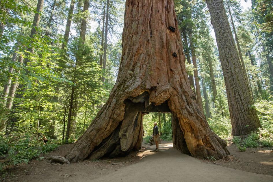 Les sequoias géants de Californie