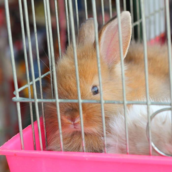 Laver la cage des animaux for Laver frigo vinaigre blanc