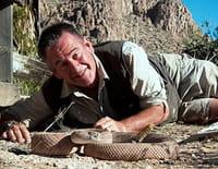 Les 10 serpents les plus dangereux : Des Etats-Unis