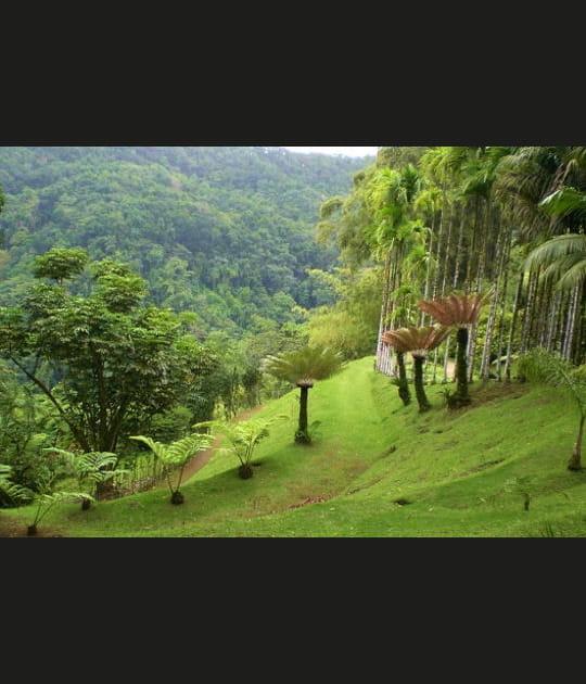 Au paradis de Balata en Martinique